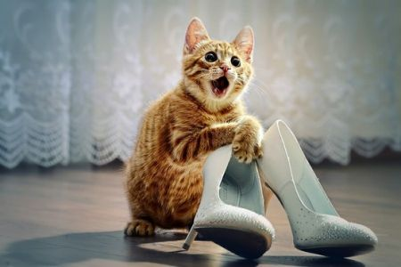 Cat-with-wedding-shoes1