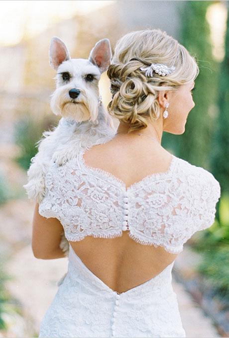 Wedding-Hochzeit-Hund